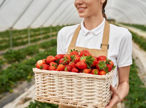 ค้าส่งผัก/ผลไม้ในประเทศและต่างประเทศ