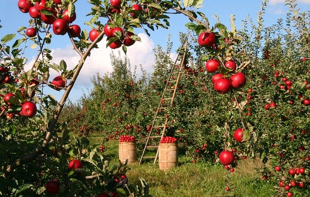 apple-1873078_640.jpg